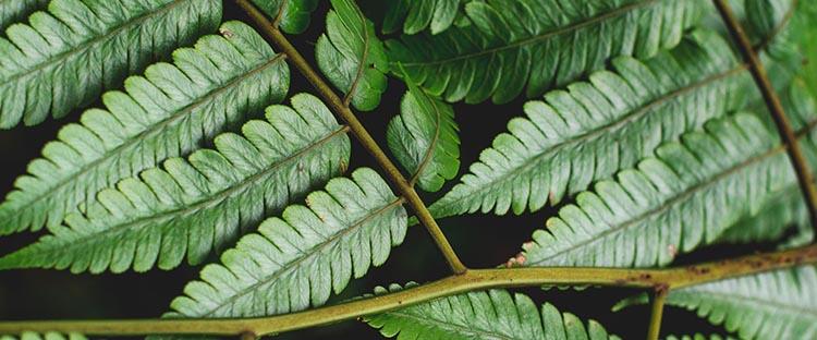 ESG Investing (Leaf close up)